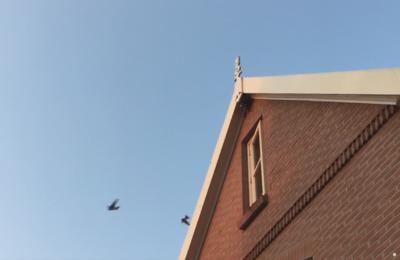 Zwaluw - Hofvogels