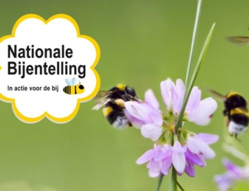 Doe mee aan de nationale bijentelling op 17 en 18  april