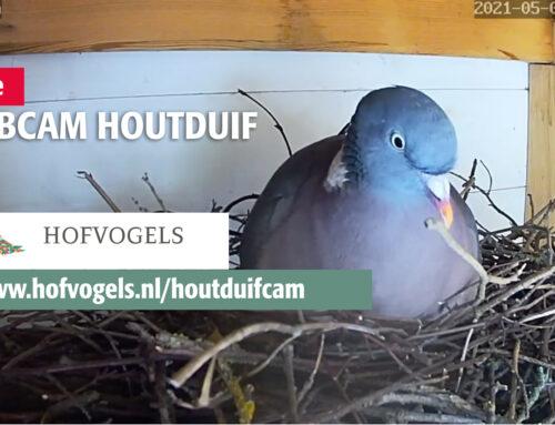 Webcam houtduif